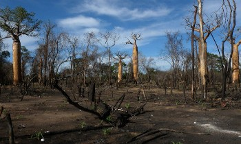 deforestation à Madagascar
