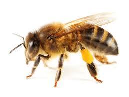 Surpopulation mondiale et declin des abeilles