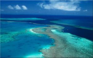La disparition du corail Stop Population