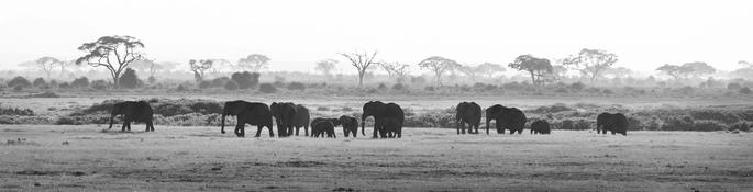 Surpopulation mondiale et disparition des espèces
