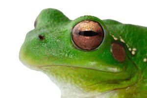 la grenouille dans la casserole stop population