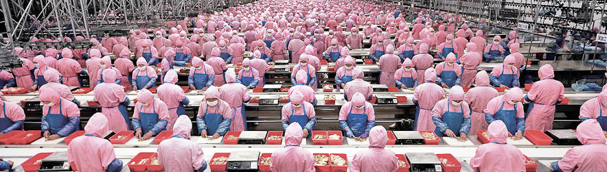surpopulation mondiale : usine de poulets en chine, Province de Jilin, Dehui
